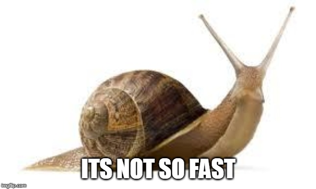 SNAIL | ITS NOT SO FAST | image tagged in snail | made w/ Imgflip meme maker
