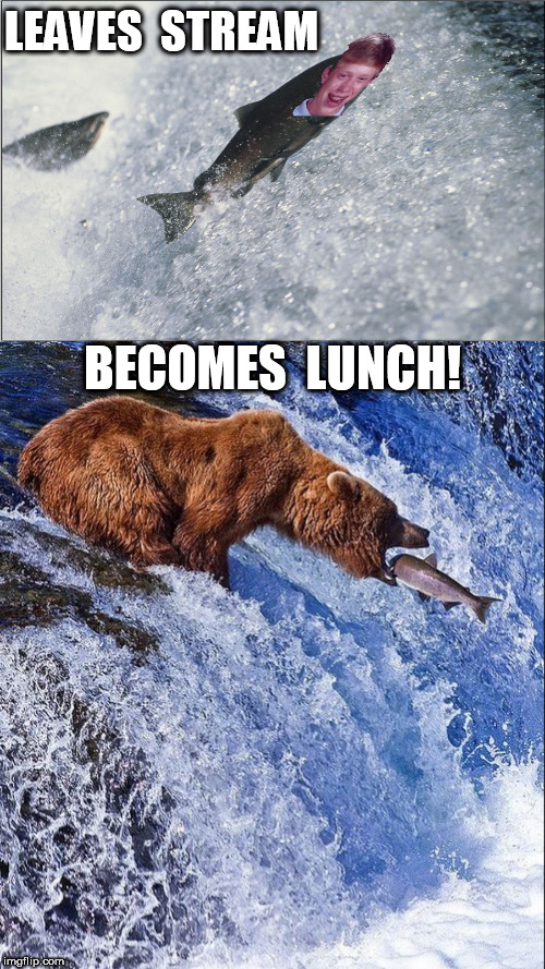 BAD LUCK BRIAN   THE  SALMON! | LEAVES  STREAM BECOMES  LUNCH! | image tagged in bad luck brian,salmon fish,dont leave the stream,lunch time,becomes | made w/ Imgflip meme maker