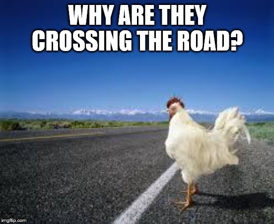 Why the chicken Cross the road | WHY ARE THEY CROSSING THE ROAD? | image tagged in why the chicken cross the road | made w/ Imgflip meme maker