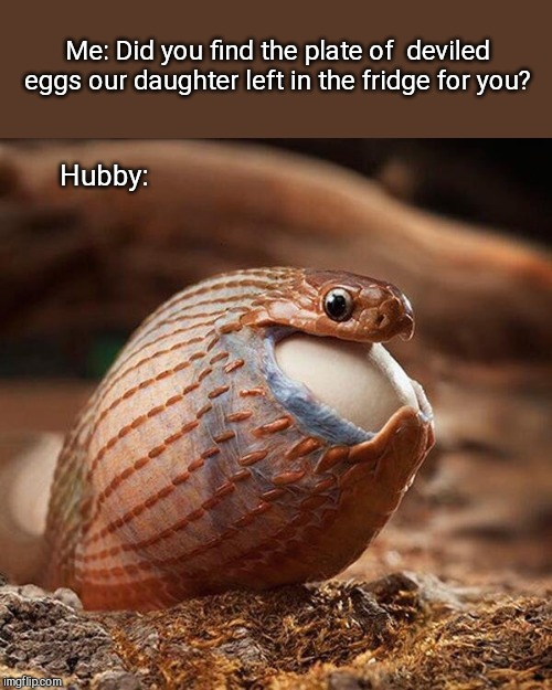 Actual photo of my husband on his birthday | Me: Did you find the plate of  deviled eggs our daughter left in the fridge for you? Hubby: | image tagged in snake eats egg,humor,family life | made w/ Imgflip meme maker