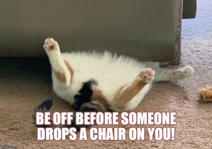 BE OFF BEFORE SOMEONE DROPS A CHAIR ON YOU! | image tagged in funny cats,animals,funny cat memes | made w/ Imgflip meme maker
