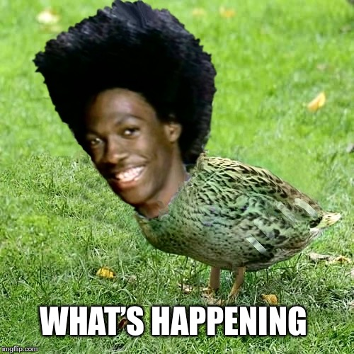 Duckith Wheatith | WHAT'S HAPPENING | image tagged in duckith wheatith | made w/ Imgflip meme maker