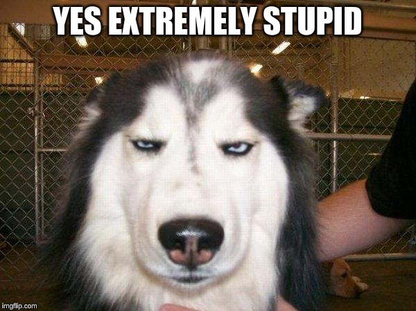 seriously_husky | YES EXTREMELY STUPID | image tagged in seriously_husky | made w/ Imgflip meme maker