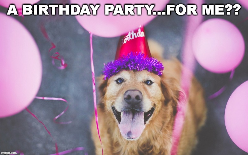 Dogust 1st | A BIRTHDAY PARTY...FOR ME?? | image tagged in dogs,birthday,happy birthday dog | made w/ Imgflip meme maker