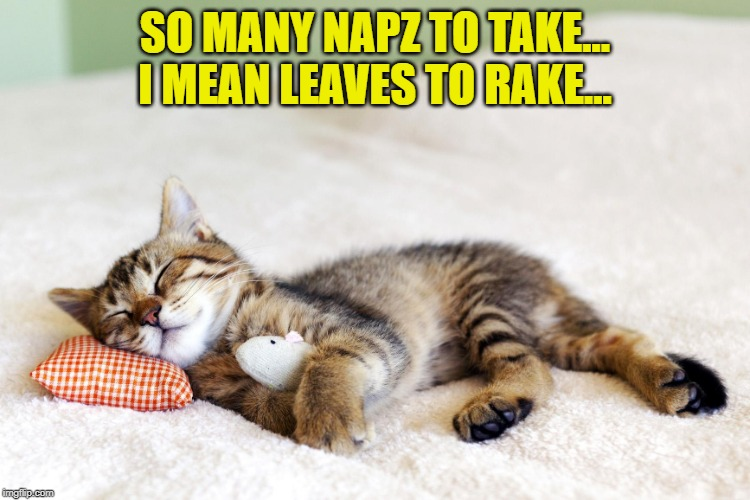 Sleeping cat | SO MANY NAPZ TO TAKE... I MEAN LEAVES TO RAKE... | image tagged in sleeping cat | made w/ Imgflip meme maker