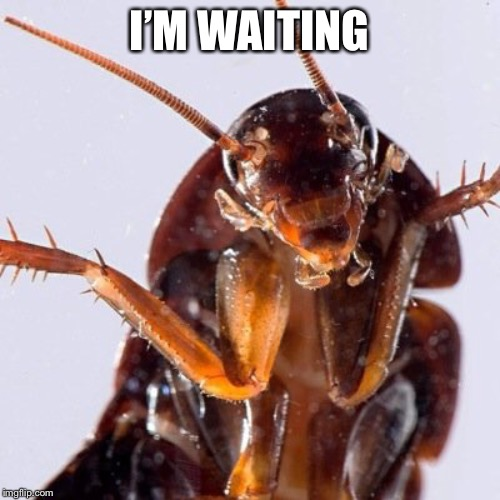 Roach | I'M WAITING | image tagged in roach | made w/ Imgflip meme maker