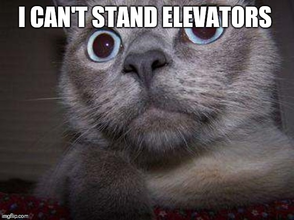Freaky eye cat | I CAN'T STAND ELEVATORS | image tagged in freaky eye cat | made w/ Imgflip meme maker
