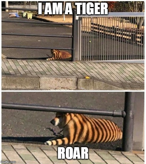 DOGE TIGER | I AM A TIGER ROAR | image tagged in tiger week,dog | made w/ Imgflip meme maker