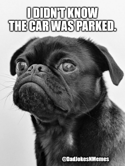 Cars Be Parkin. Pugs be Chasin. #PugLife | I DIDN'T KNOW THE CAR WAS PARKED. @DadJokesNMemes | image tagged in pugs,dad joke | made w/ Imgflip meme maker