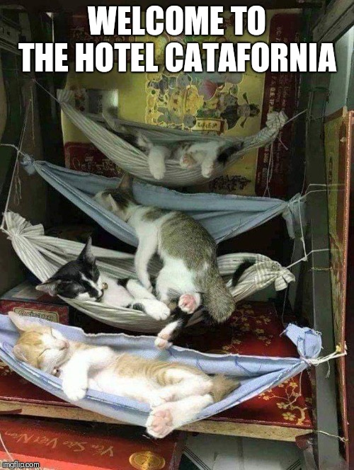 Cats in the cradle | WELCOME TO THE HOTEL CATAFORNIA | image tagged in funny cats,hotel catafornia | made w/ Imgflip meme maker