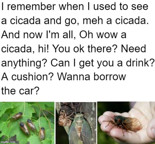Summer cicada love meme | image tagged in summer,insects,cute animals,love | made w/ Imgflip meme maker