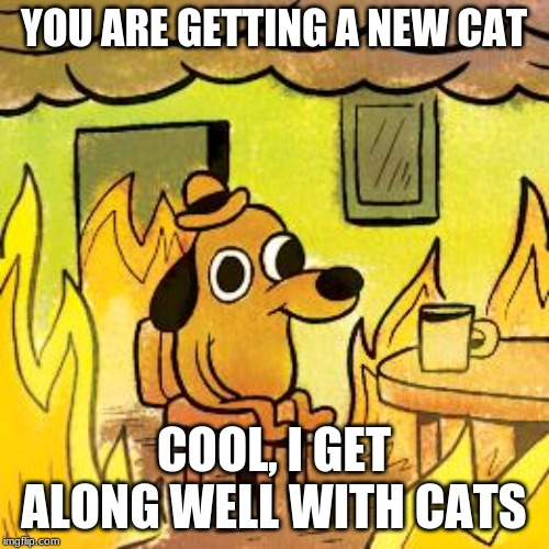 Dog in burning house | YOU ARE GETTING A NEW CAT COOL, I GET ALONG WELL WITH CATS | image tagged in dog in burning house | made w/ Imgflip meme maker