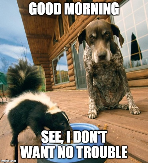 no trouble | GOOD MORNING SEE, I DON'T WANT NO TROUBLE | image tagged in why me | made w/ Imgflip meme maker