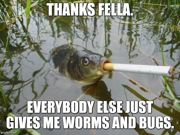 THANKS FELLA. EVERYBODY ELSE JUST GIVES ME WORMS AND BUGS. | made w/ Imgflip meme maker