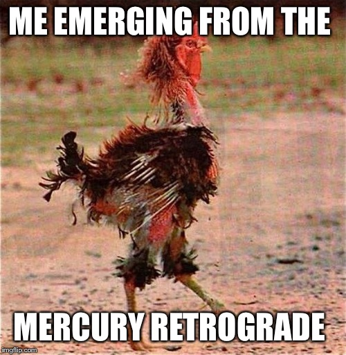 ME EMERGING FROM THE MERCURY RETROGRADE | image tagged in rooster | made w/ Imgflip meme maker