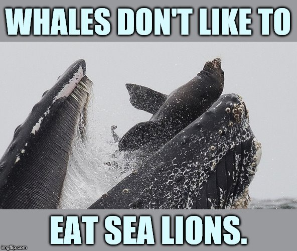 I Am So Glad |  WHALES DON'T LIKE TO; EAT SEA LIONS. | image tagged in memes,sea lion,mouth,whale,don't,eat it | made w/ Imgflip meme maker