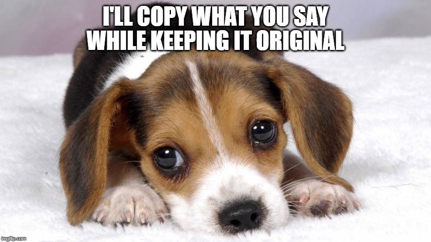 Puppy dog eyes | I'LL COPY WHAT YOU SAY WHILE KEEPING IT ORIGINAL | image tagged in puppy dog eyes | made w/ Imgflip meme maker