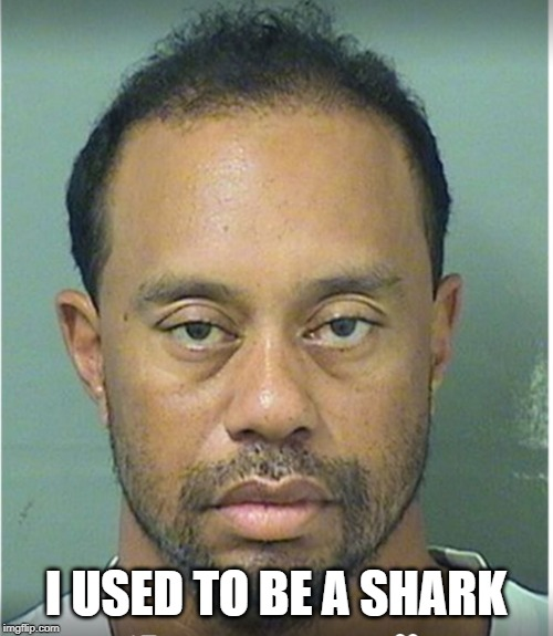 Tiger Woods Mug Shot  | I USED TO BE A SHARK | image tagged in tiger woods mug shot | made w/ Imgflip meme maker