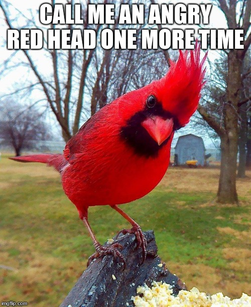 You were warned | CALL ME AN ANGRY RED HEAD ONE MORE TIME | image tagged in angry bird,angry red head,you were warned,walk carefully,feed the bird,ban meme tags | made w/ Imgflip meme maker