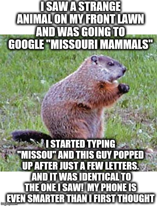 "How did it know what I was looking for? | I SAW A STRANGE ANIMAL ON MY FRONT LAWN AND WAS GOING TO GOOGLE ""MISSOURI MAMMALS"" I STARTED TYPING ""MISSOU"" AND THIS GUY POPPED UP AFTER JU 