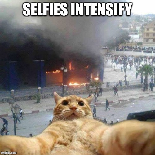 Selfie cat | SELFIES INTENSIFY | image tagged in selfie cat | made w/ Imgflip meme maker