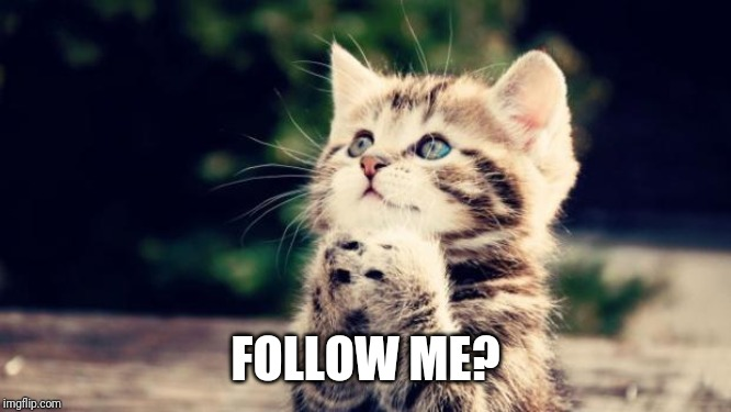 Cute kitten | FOLLOW ME? | image tagged in cute kitten | made w/ Imgflip meme maker