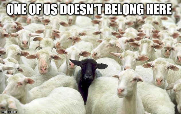 black sheep | ONE OF US DOESN'T BELONG HERE | image tagged in black sheep | made w/ Imgflip meme maker
