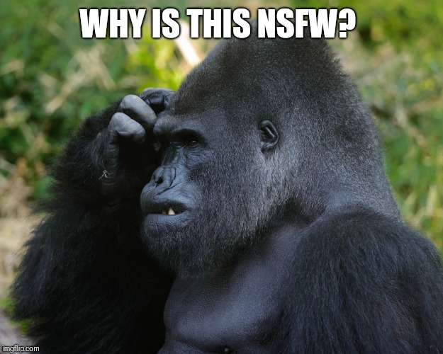 Gorilla Scratching Head | WHY IS THIS NSFW? | image tagged in gorilla scratching head | made w/ Imgflip meme maker