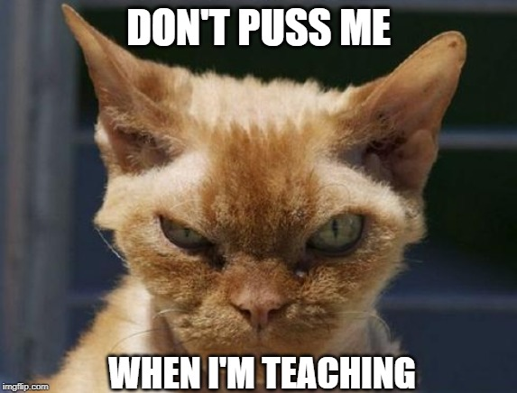 Mad Cat | DON'T PUSS ME WHEN I'M TEACHING | image tagged in mad cat | made w/ Imgflip meme maker