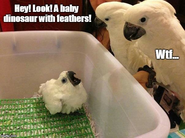 Cockatoo family | image tagged in birb,cockatoo,cockatoos,baby bird | made w/ Imgflip meme maker