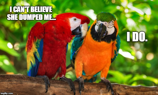 Dumped parrot | image tagged in macaw,parrot,depressed parrot,birb | made w/ Imgflip meme maker