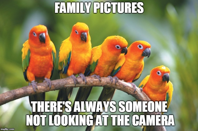 Conure Family Picture | image tagged in conure,family pictures,family pic,parrots,birb | made w/ Imgflip meme maker