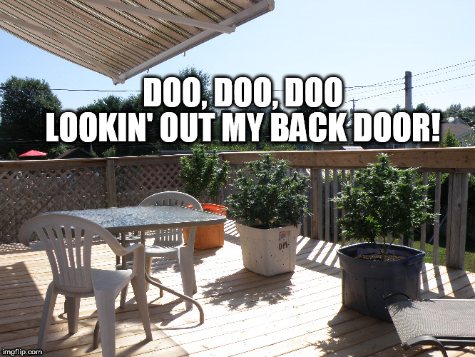 DOO, DOO, DOO LOOKIN' OUT MY BACK DOOR! | image tagged in 420,cannabis,ganja,weed,legalize weed,cannabissaveslives | made w/ Imgflip meme maker