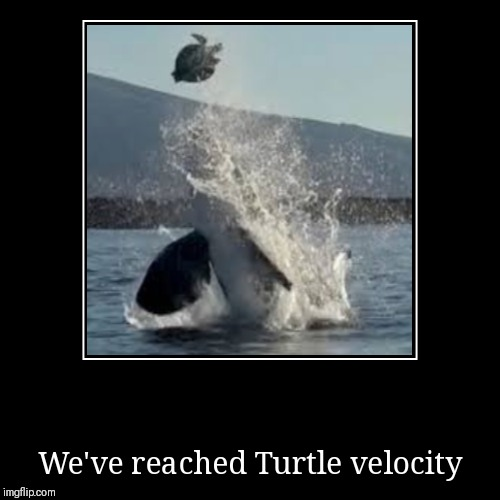 We've reached Turtle velocity | image tagged in funny,demotivationals | made w/ Imgflip demotivational maker