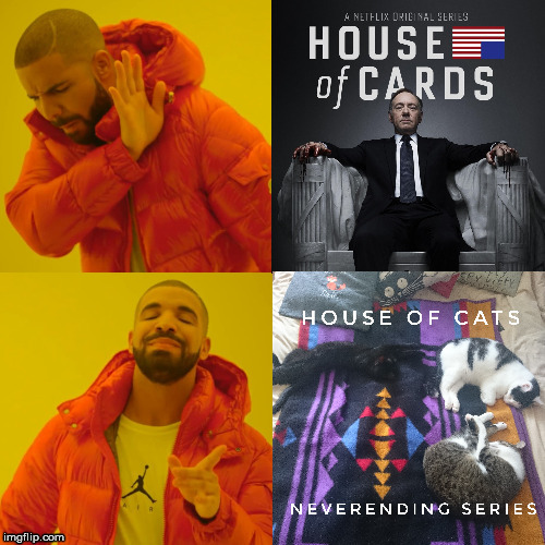 House of cats | image tagged in cats,drake | made w/ Imgflip meme maker