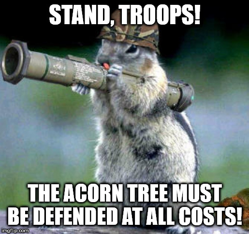 Bazooka Squirrel | STAND, TROOPS! THE ACORN TREE MUST BE DEFENDED AT ALL COSTS! | image tagged in memes,bazooka squirrel | made w/ Imgflip meme maker