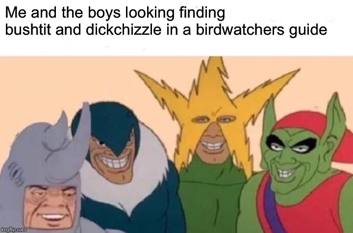 Don't forget the important brown booby and lesser booby | Me and the boys looking finding bushtit and dickchizzle in a birdwatchers guide | image tagged in memes,me and the boys,dank memes,dank meme,birds,cringe | made w/ Imgflip meme maker