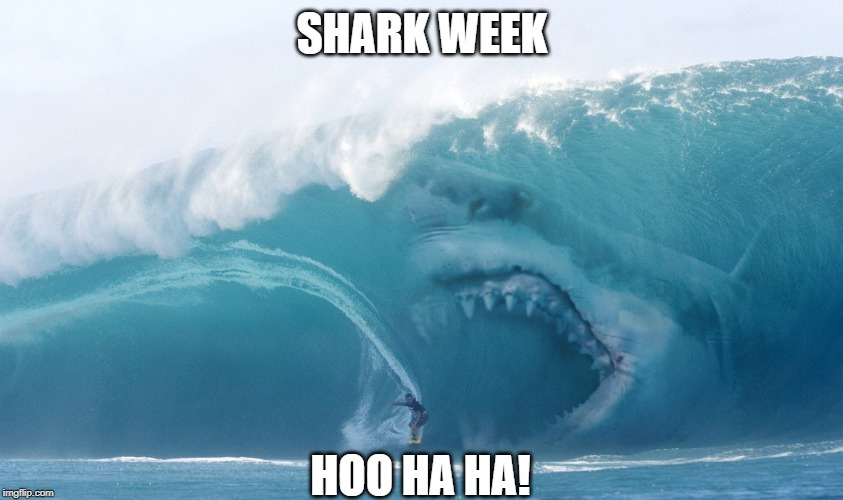 SHARK WEEK HOO HA HA! | image tagged in shark,shark week,sharks,sharkbait,finding nemo | made w/ Imgflip meme maker