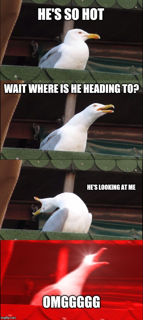 Hot dude |  HE'S SO HOT; WAIT WHERE IS HE HEADING TO? HE'S LOOKING AT ME; OMGGGGG | image tagged in memes,inhaling seagull,hahaha,funny memes,hot | made w/ Imgflip meme maker