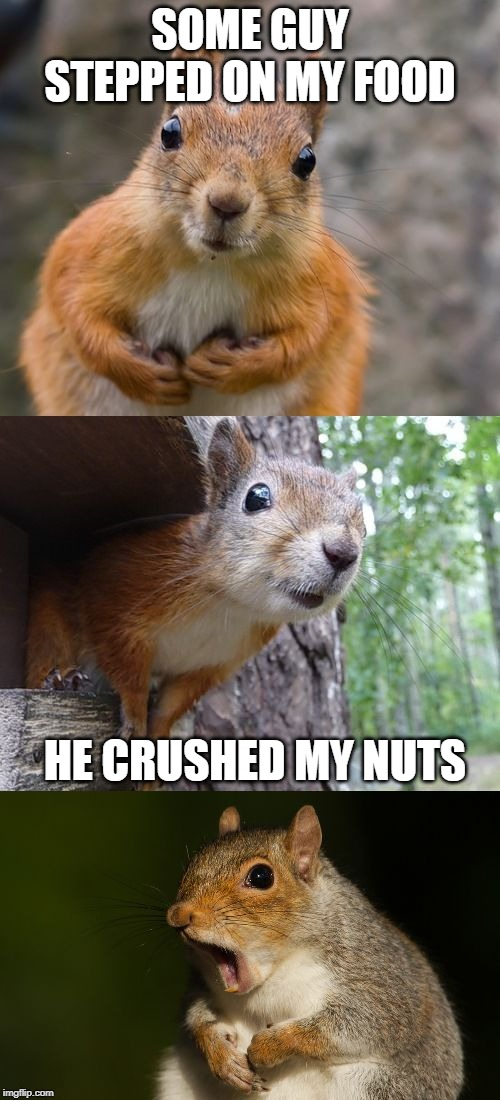 bad pun squirrel |  SOME GUY STEPPED ON MY FOOD; HE CRUSHED MY NUTS | image tagged in bad pun squirrel | made w/ Imgflip meme maker