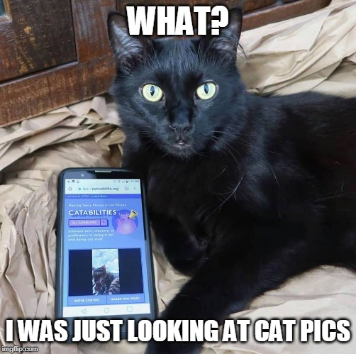 YEAH RIGHT | WHAT? I WAS JUST LOOKING AT CAT PICS | image tagged in cats,cat,smartphone,funny | made w/ Imgflip meme maker