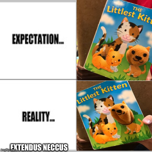 EXTENDUS NECCUS | image tagged in necc | made w/ Imgflip meme maker