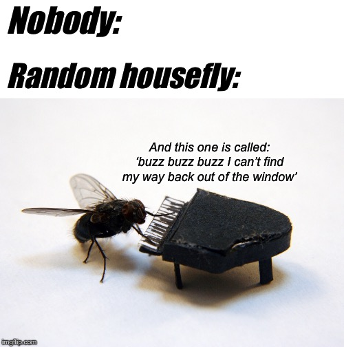 Nobody: Random housefly: And this one is called: 'buzz buzz buzz I can't find my way back out of the window' | image tagged in blank white template | made w/ Imgflip meme maker