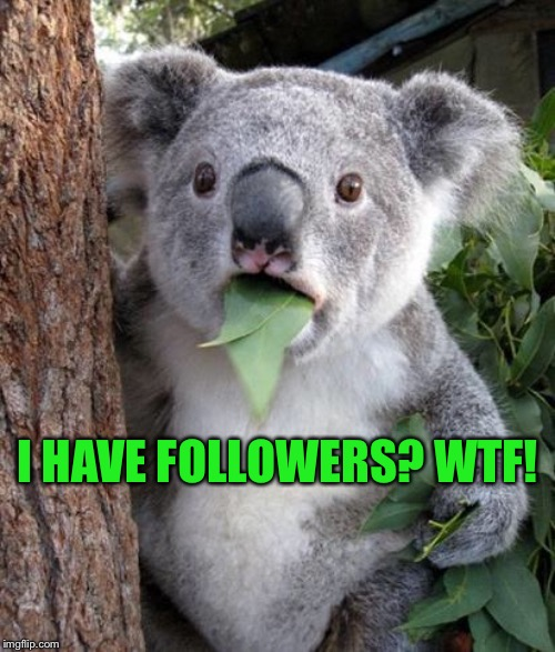 WTF Koala | I HAVE FOLLOWERS? WTF! | image tagged in wtf koala | made w/ Imgflip meme maker