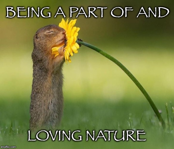 Loving What You're Intimately Connected To | BEING A PART OF AND LOVING NATURE | image tagged in nature,part of,loving,chipmunk,flower,hug | made w/ Imgflip meme maker