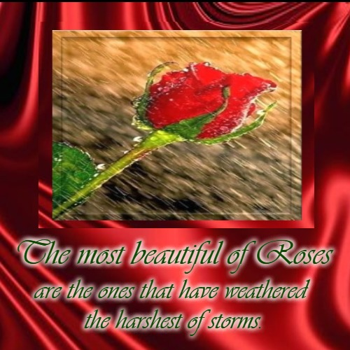 The Weathered Rose | The most beautiful of Roses | are the ones that have weathered  the harshest of storms. | image tagged in demotivationals,beauty,love,romantic,roses | made w/ Imgflip demotivational maker