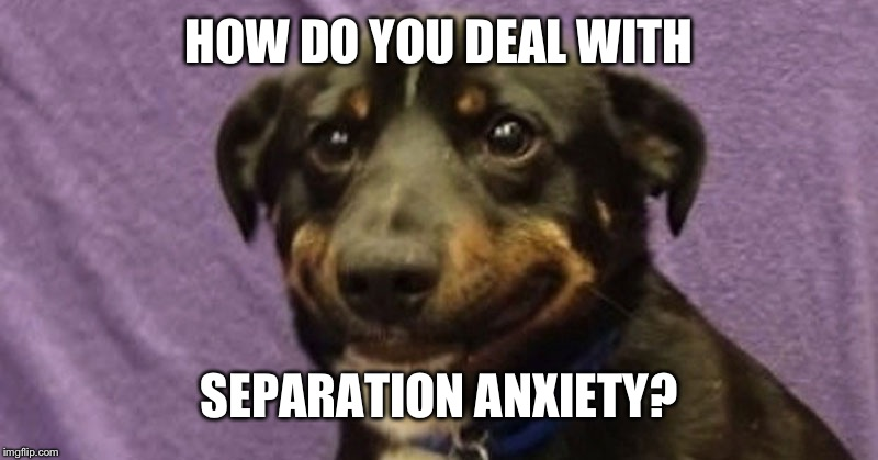 Anxiety dog | HOW DO YOU DEAL WITH SEPARATION ANXIETY? | image tagged in anxiety dog | made w/ Imgflip meme maker