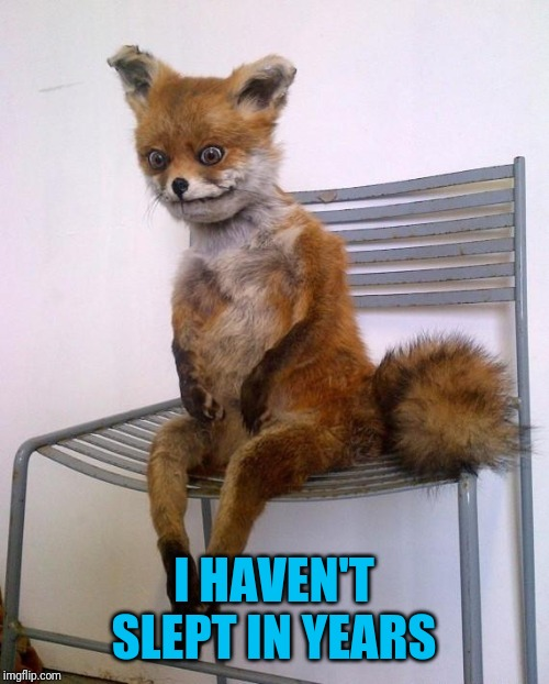 Stoned Fox | I HAVEN'T SLEPT IN YEARS | image tagged in stoned fox | made w/ Imgflip meme maker