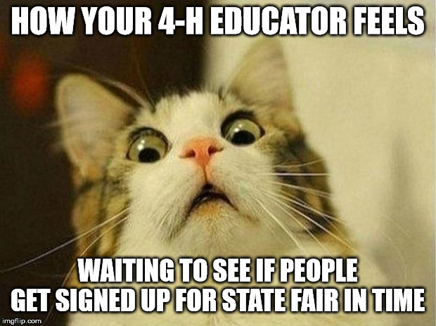 Scared Cat | HOW YOUR 4-H EDUCATOR FEELS WAITING TO SEE IF PEOPLE GET SIGNED UP FOR STATE FAIR IN TIME | image tagged in memes,scared cat | made w/ Imgflip meme maker
