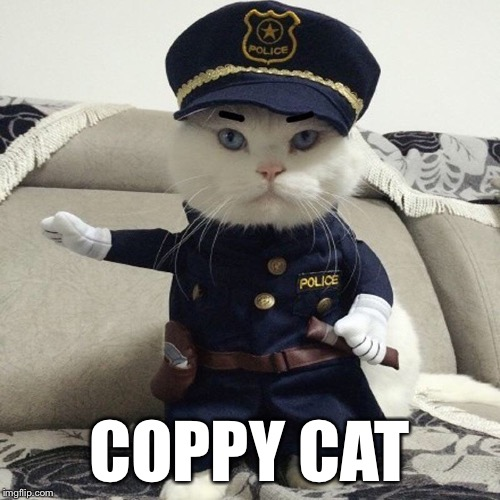 COPPY CAT | image tagged in memes,funny,funny animals,bad pun,bad puns,cute cat | made w/ Imgflip meme maker